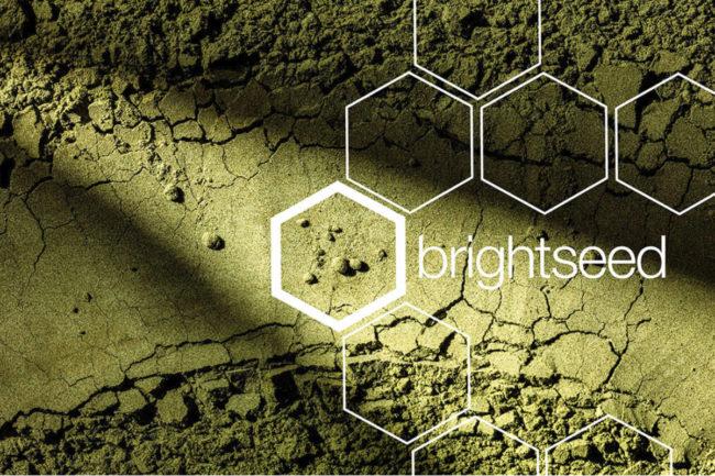 Brightseed logo overlayed over plant-based powder