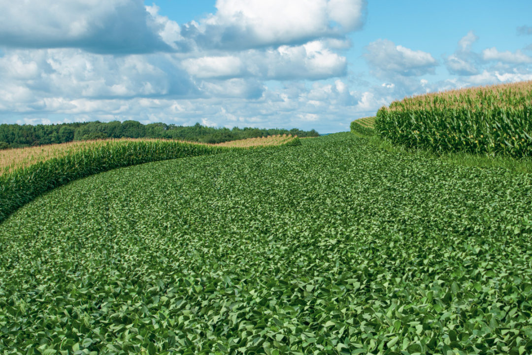Corn and soybean crops