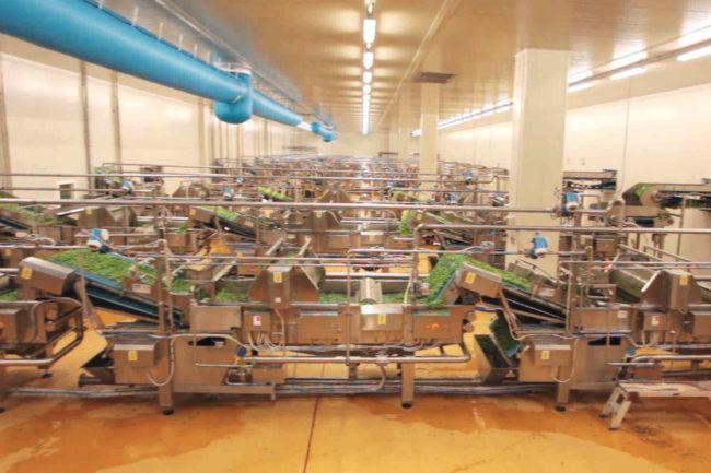 Bonduelle Americas Long Life business frozen vegetable processing plant