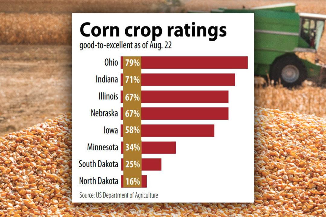 Corn crop ratings chart