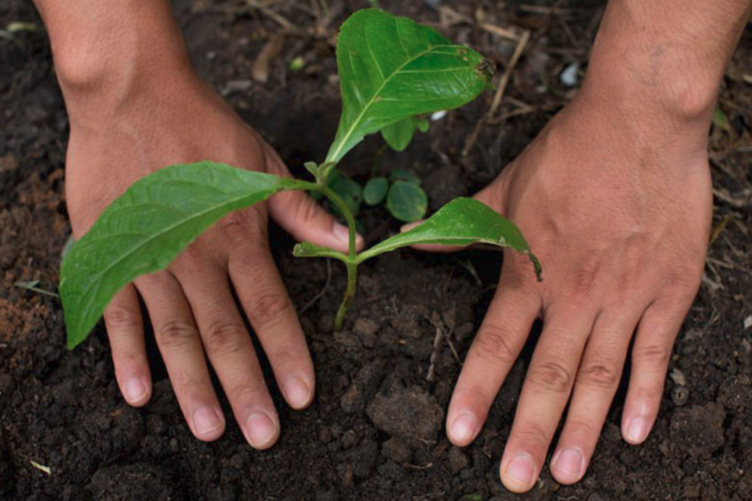 Hands in dirt around a growing plant