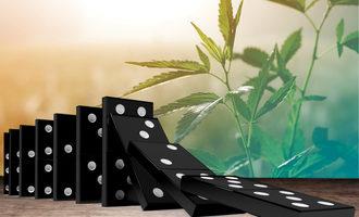 Cannabisdominos lead