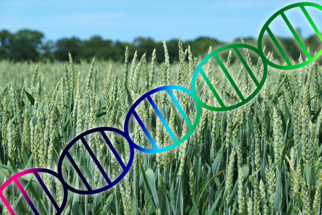Crop genome editing
