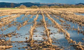 Floodedcrops_lead