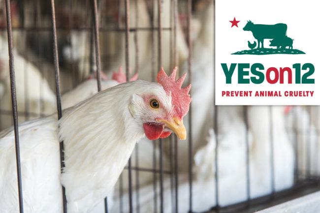 Animal cruelty prevention ballot