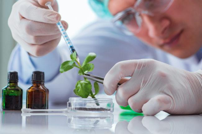 Plant biotechnology