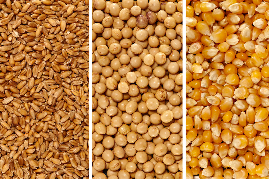 Wheat, corn and soy