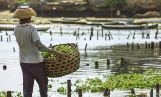 Seaweedfarming lead