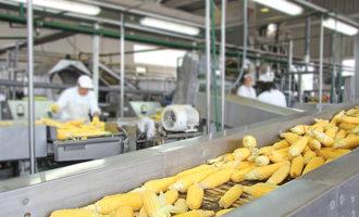 Cornproduction_lead