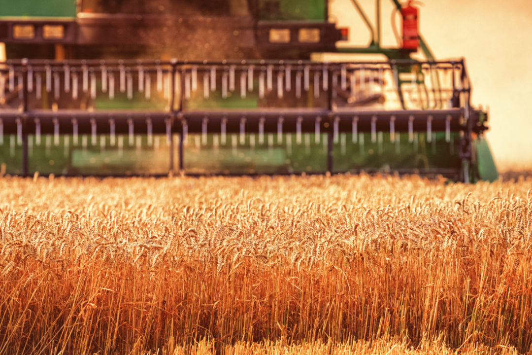 Wheat harvesting combine