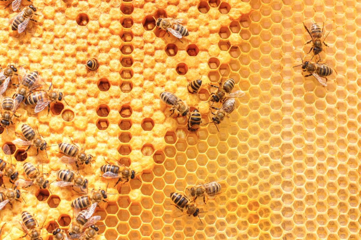 Agriculture & Forestry Livestock Supplies 2019 Honey Bee Colony