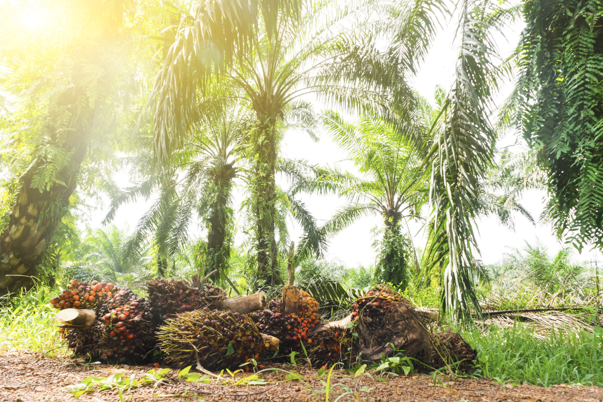 The Importance Of Tracking Palm Oil 2018 08 13 Food