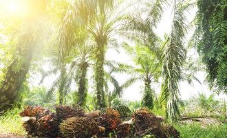 Palmforest_lead