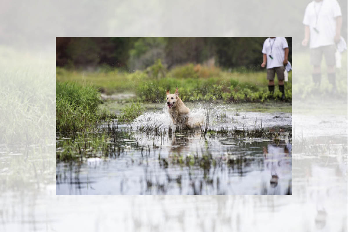Ducks Unlimited Dog in Water