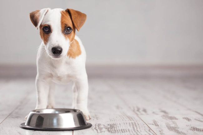 Adobestock image of dog with food bowl