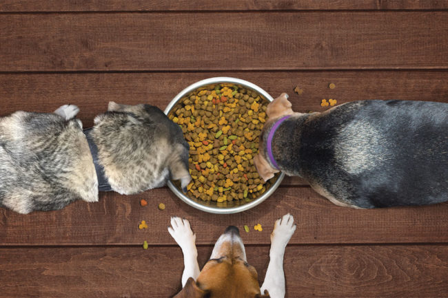Dogs around a food bowl