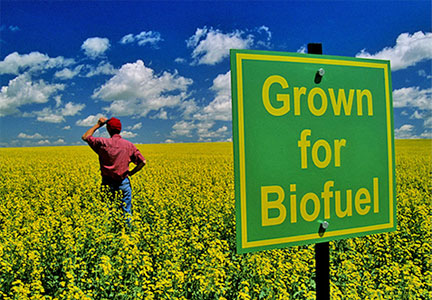 "Farmer in field with sign that says ""Grown for Biofuel"""