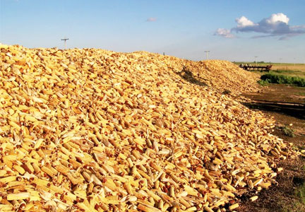 U.S.D.A. surprises with more corn, fewer wheat acres | Food ...