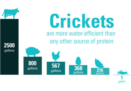 Crickets water chart from Bitty foods