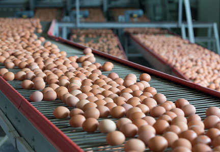 Egg production