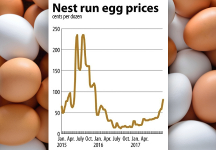 Nest egg run prices, egg replacement