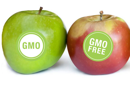 Apples labeled GMO or GMO free