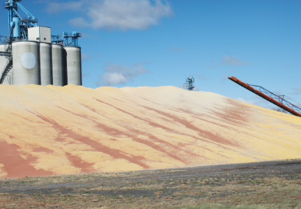 U.S.D.A. crop forecasts above expectations
