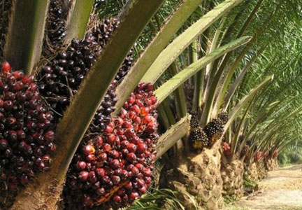 IOI Loders Croklaan palm oil