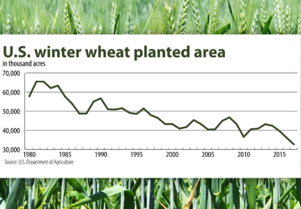 U.S. winter wheat planted area chart